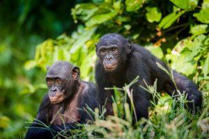 max planck foundation projekte natur artenschutz