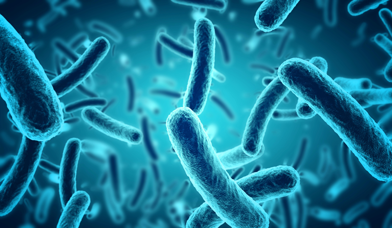 MPG Kosmos der Mikroben